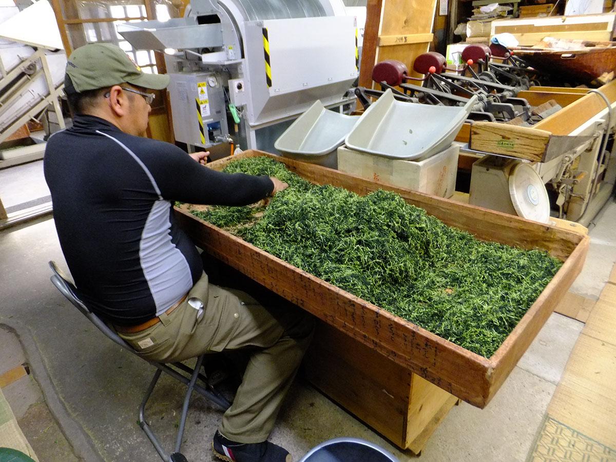 小堀遠州流青年部勉強会で山政小山園の茶葉選別